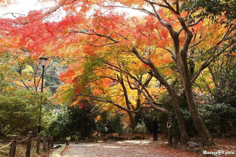 嵐山 (41)