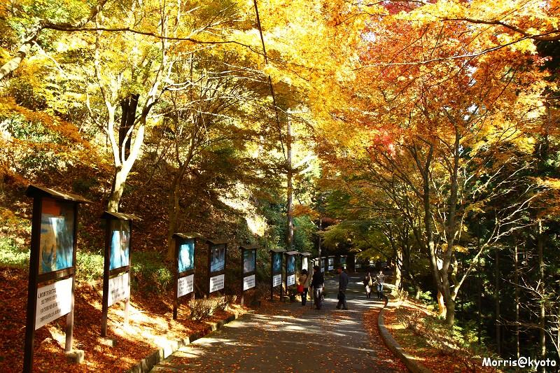 比叡山延曆寺 (49)