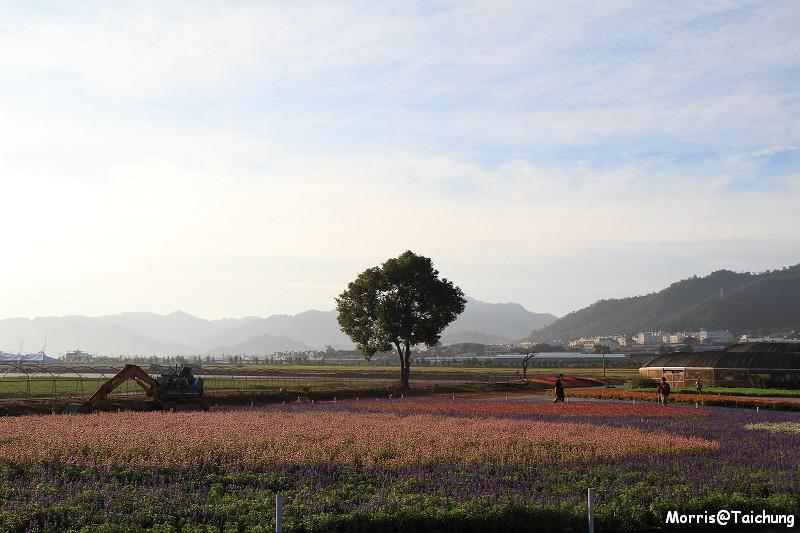 2011新社花海 (51)