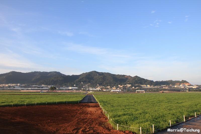 2011新社花海 (5)