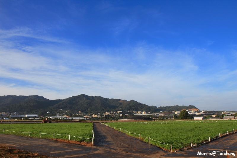 2011新社花海 (50)