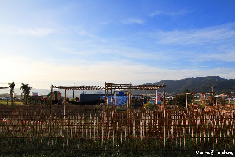 2011新社花海 (15)