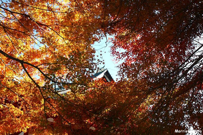 比叡山延曆寺 (61)