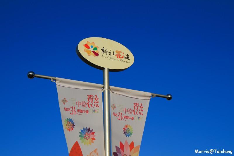 2011新社花海 (9)
