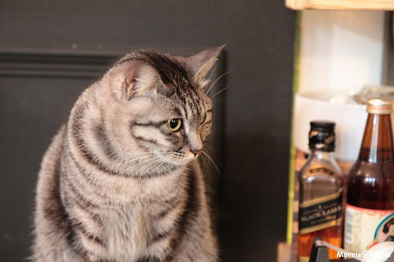 屋頂上的貓私廚 (5)