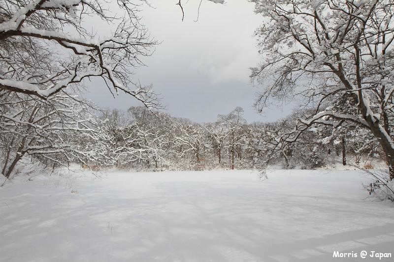 大沼公園 (83)