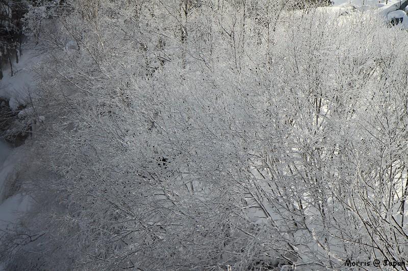 美瑛之冬 二 (100)