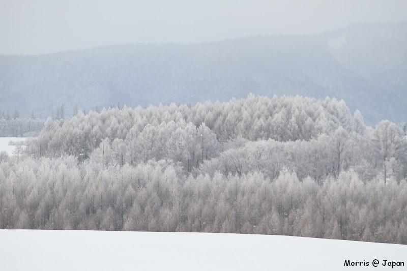 美瑛之冬一 (68)