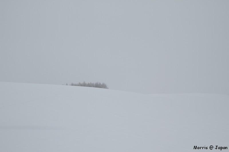 美瑛之冬 二 (16)