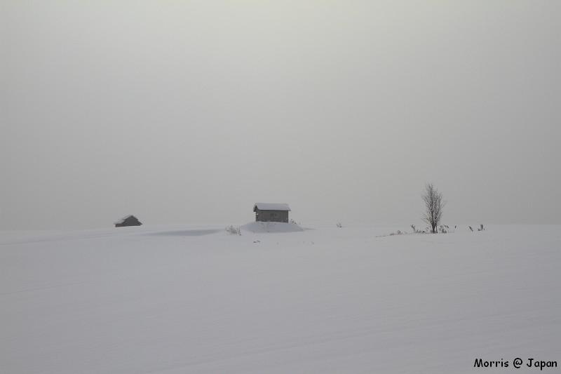 美瑛之冬 二 (10)