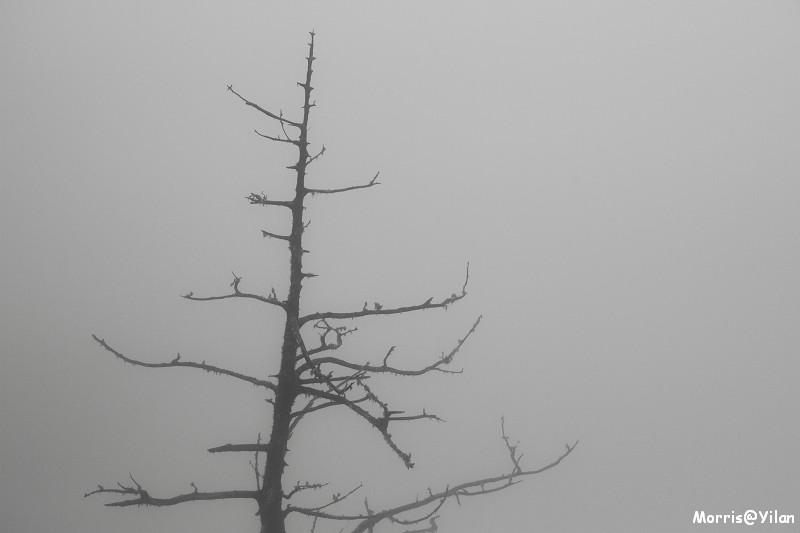 翠峰湖環山步道 (40)