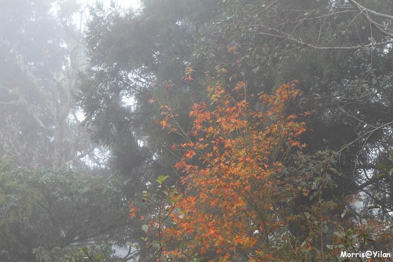 宜蘭太平山 (14)