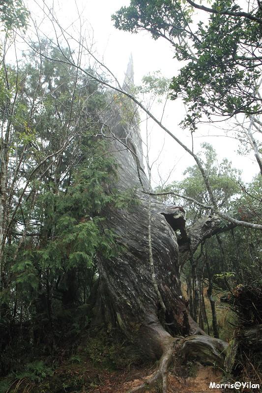 翠峰湖環山步道 (43)