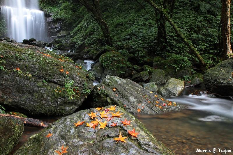雲森瀑布 楓紅楓落 (12)