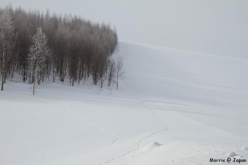 美瑛之冬 二 (24)