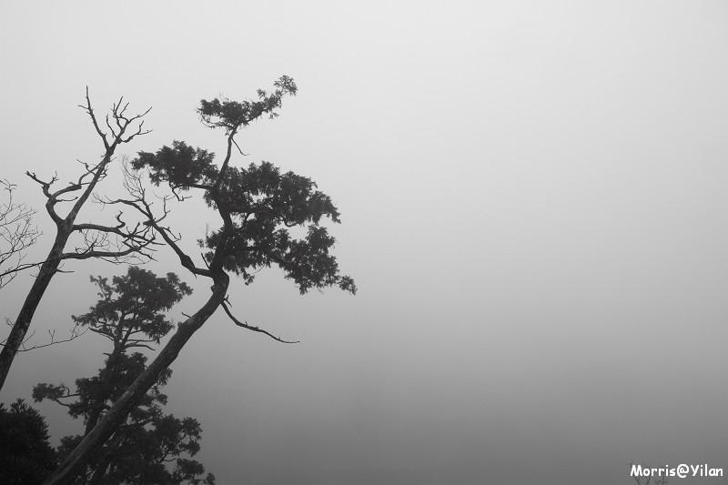 翠峰湖環山步道 (47)