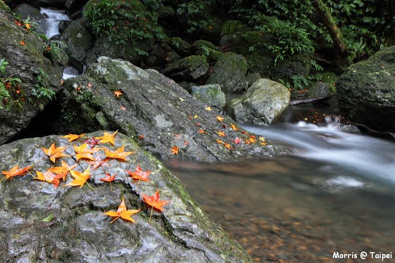 雲森瀑布 楓紅楓落 (11)