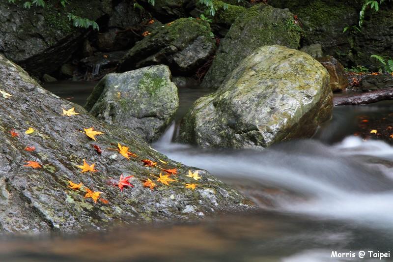 雲森瀑布 楓紅楓落 (10)