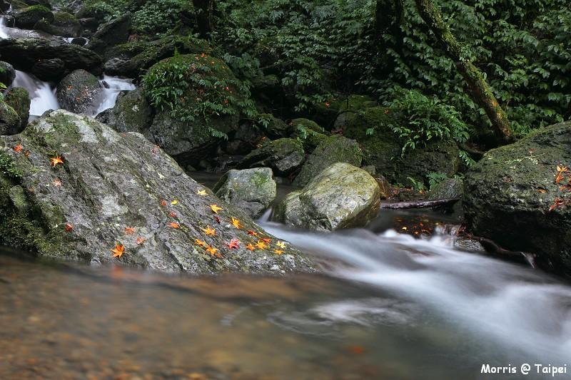 雲森瀑布 楓紅楓落 (9)