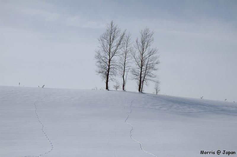 美瑛之冬 二 (52)