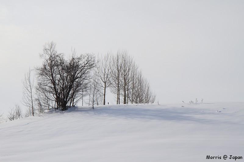 美瑛之冬 二 (54)