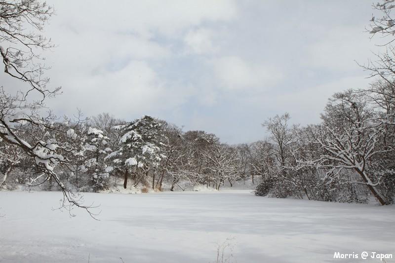 大沼公園 (81)