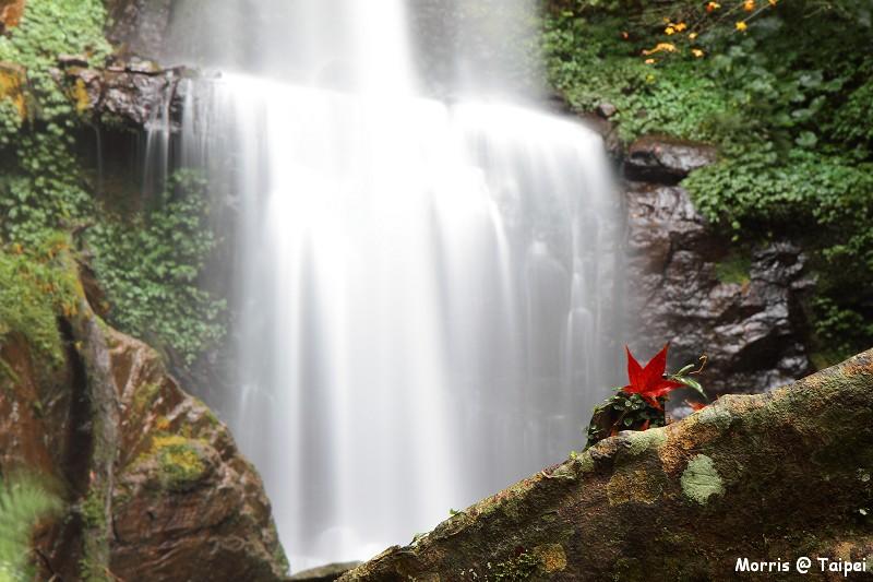 雲森瀑布 楓紅楓落 (29)