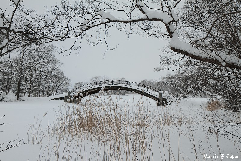大沼公園 (42)