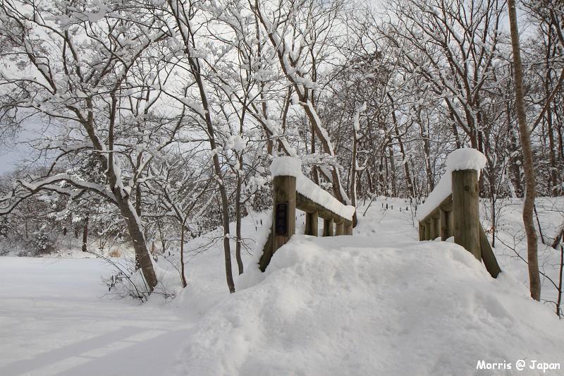 大沼公園 (84)