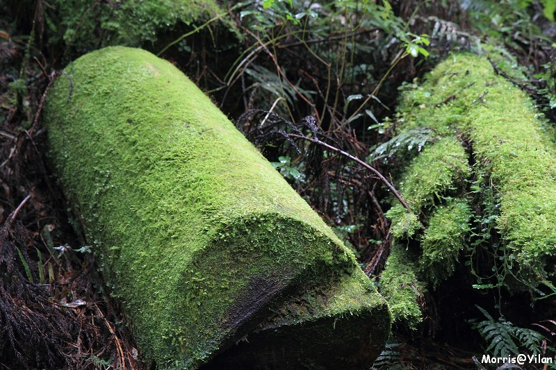 三疊瀑布 (7)