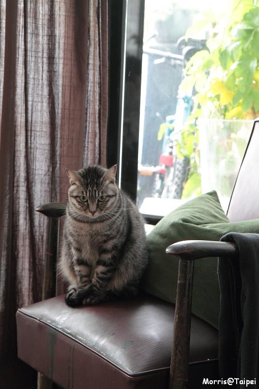 屋頂上的貓私廚 (8)