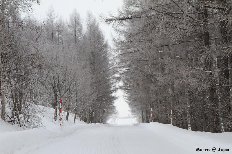 美瑛之冬一 (93)