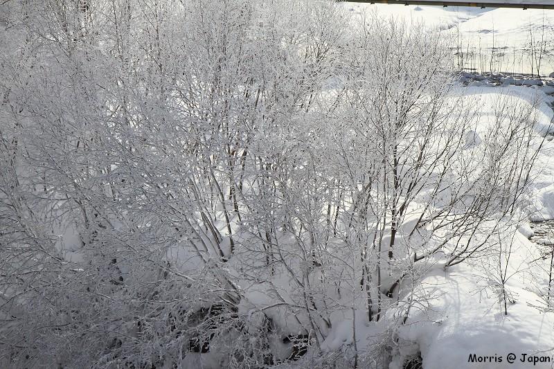 美瑛之冬 二 (96)