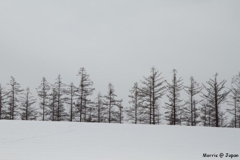 美瑛之冬 二 (28)