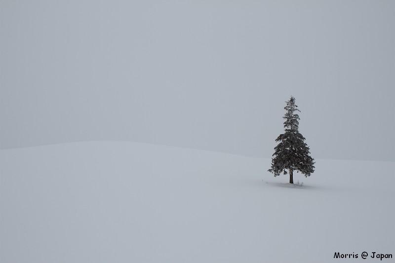 美瑛之冬一 (85)