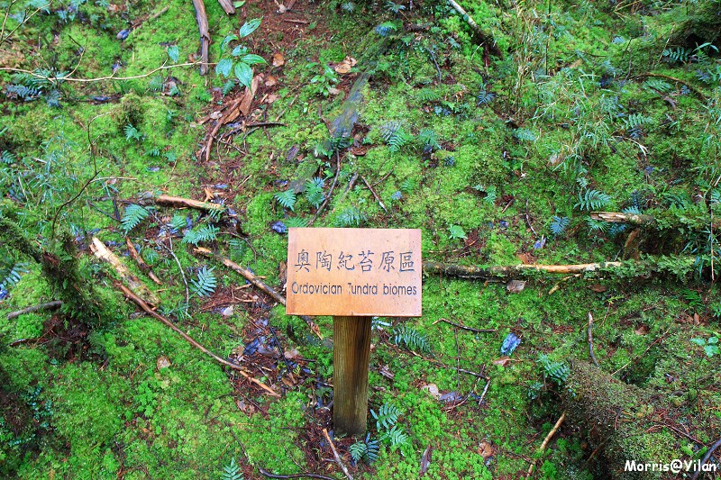 翠峰湖環山步道 (16)