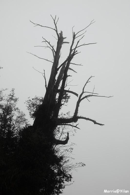 宜蘭太平山 (16)