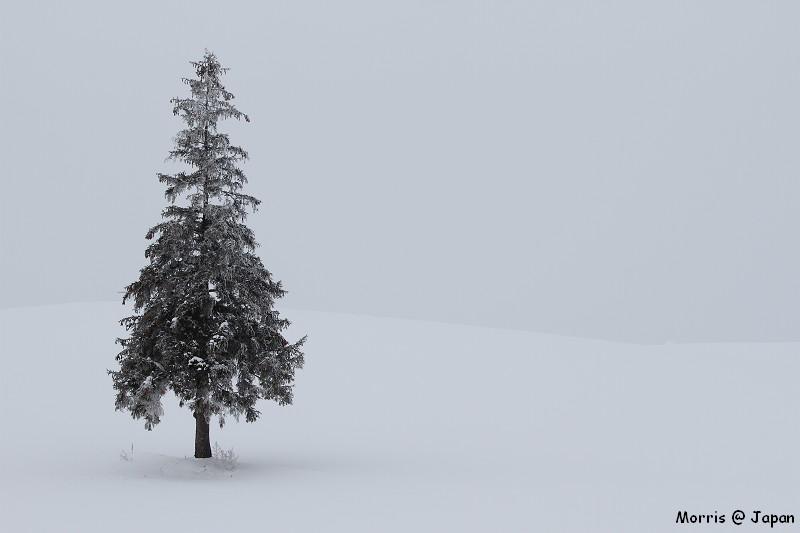 美瑛之冬一 (81)