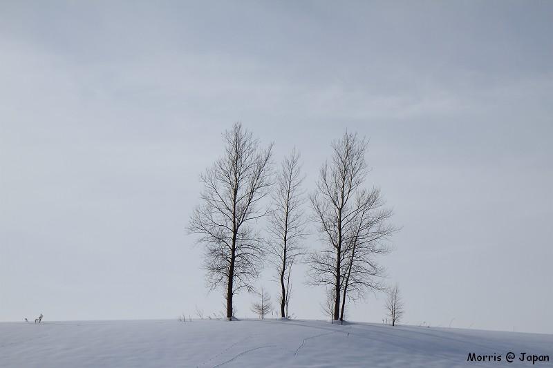 美瑛之冬 二 (51)