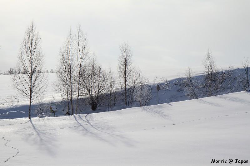 美瑛之冬 二 (55)