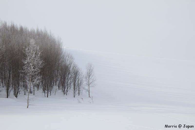 美瑛之冬 二 (23)