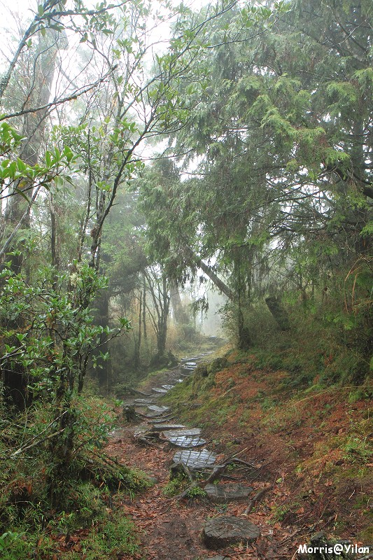 翠峰湖環山步道 (26)