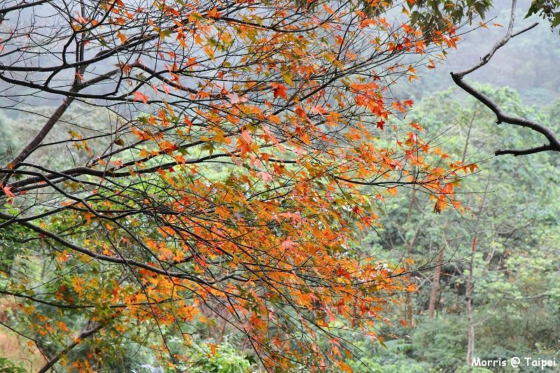 雲森瀑布 楓紅楓落 (33)