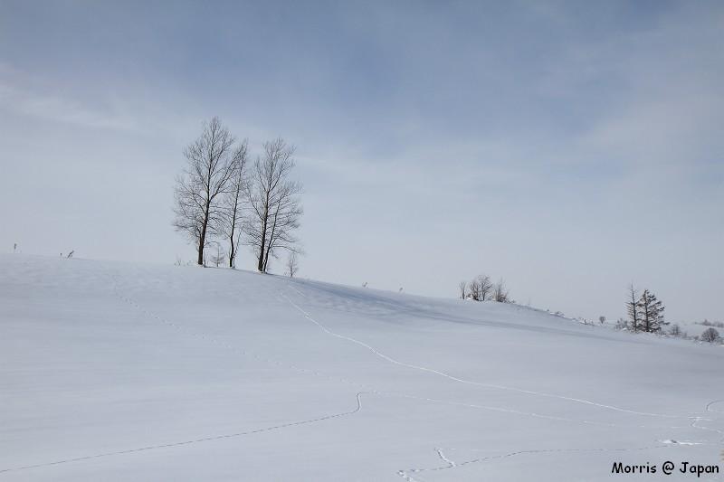 美瑛之冬 二 (56)